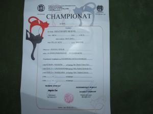 champion igo