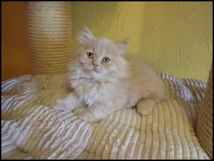 Figaro4