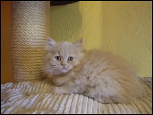 Figaro5