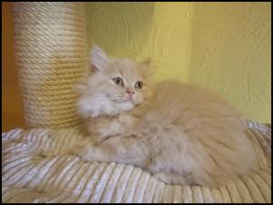 Figaro6